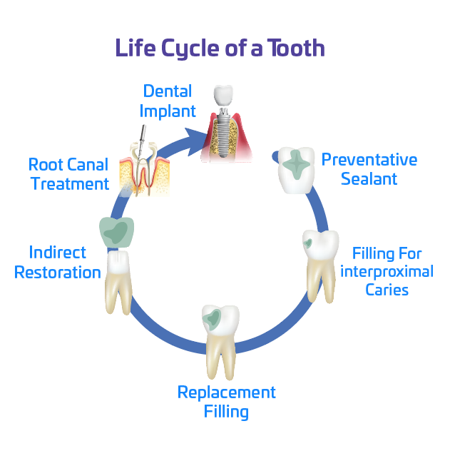 Lifecycle of a Tooth Still